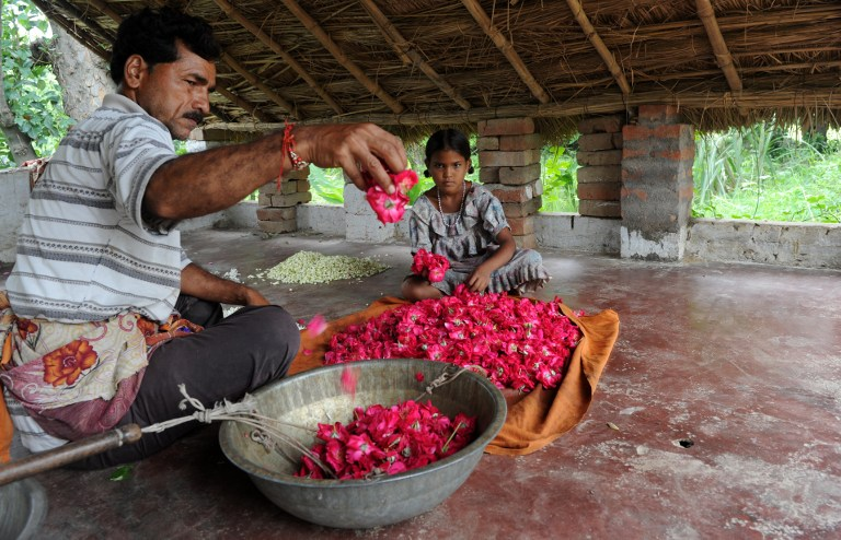 Indian flower farmers sort out petals. ©AFP