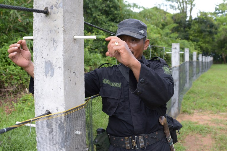 This picture taken on November 16, 2013 shows a member of the JRSCA (Javan Rhino Study and Conservation Area) showing how electical fencing will be put up to protect rhinos and other animals walking out from the forest at the Ujung Kulon National Park in Indonesia's Banten province.