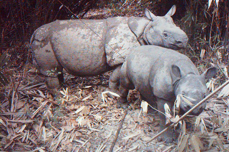 Indonesia builds sanctuary to save world's rarest rhino