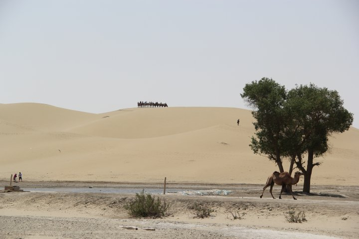 Overcoming nearly 100 kilometers from the city of Korla, the expedition members moved to the northern part of Taklimakan Desert to the site of an ancient village on the shore of Lop Nor lake. ©Ordenbek Mazbayev