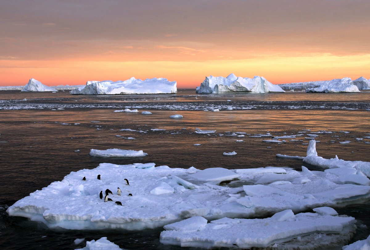 studies show melting of the polar ice caps is caused by global warming